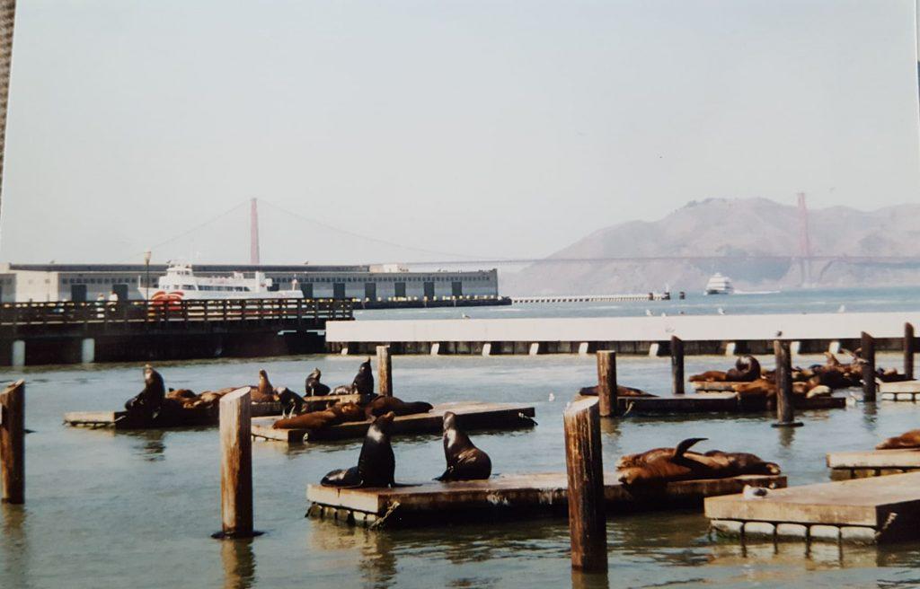 Sea lions at Fisherman's Wharf in San Francisco.